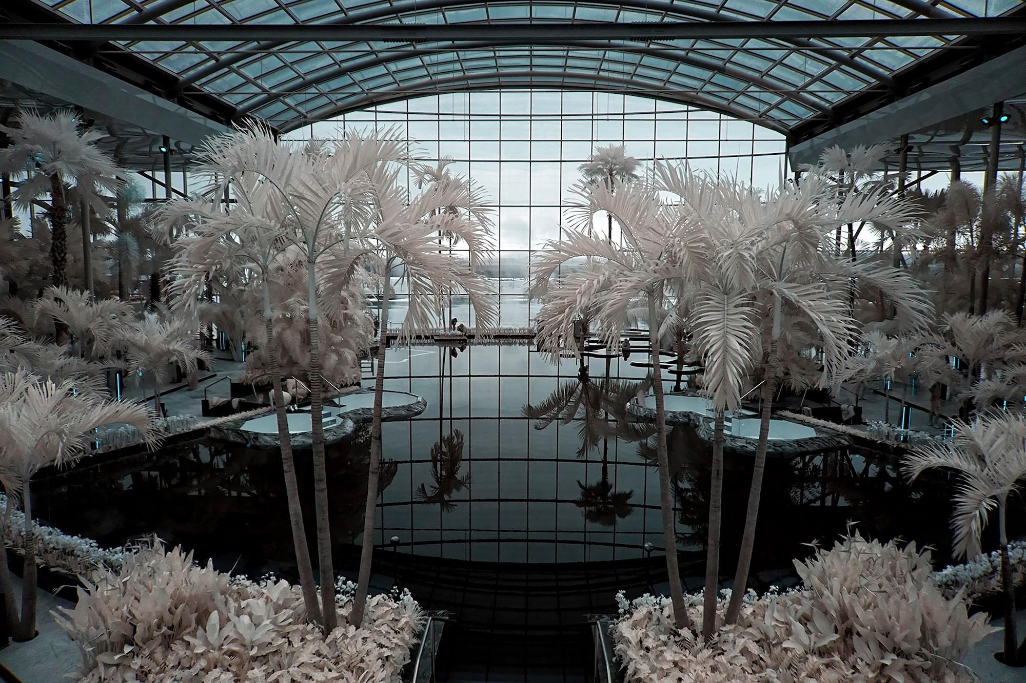 alin-popescu-sony-alpha-6000-infrared-shot-palm-trees-in-a-large-greenhouse
