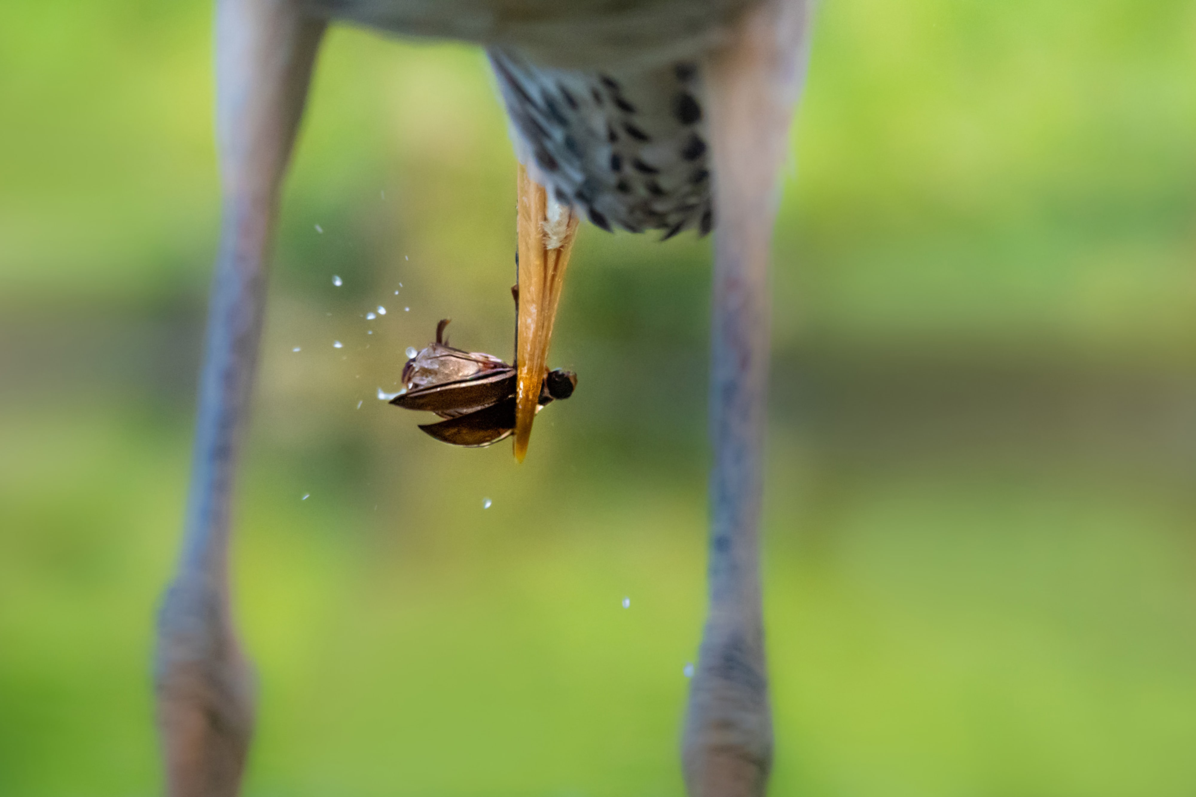 petar-sabol-sony-rx10IV-close-up-of-insect-being-held-in-birds-beak