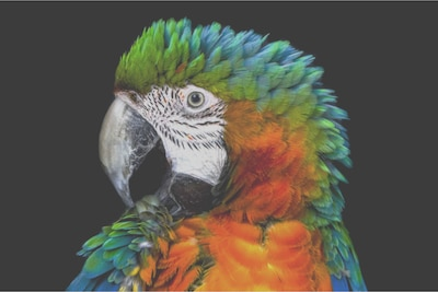 Λεπτομέρεια παπαγάλου σε LCD τύπου edge