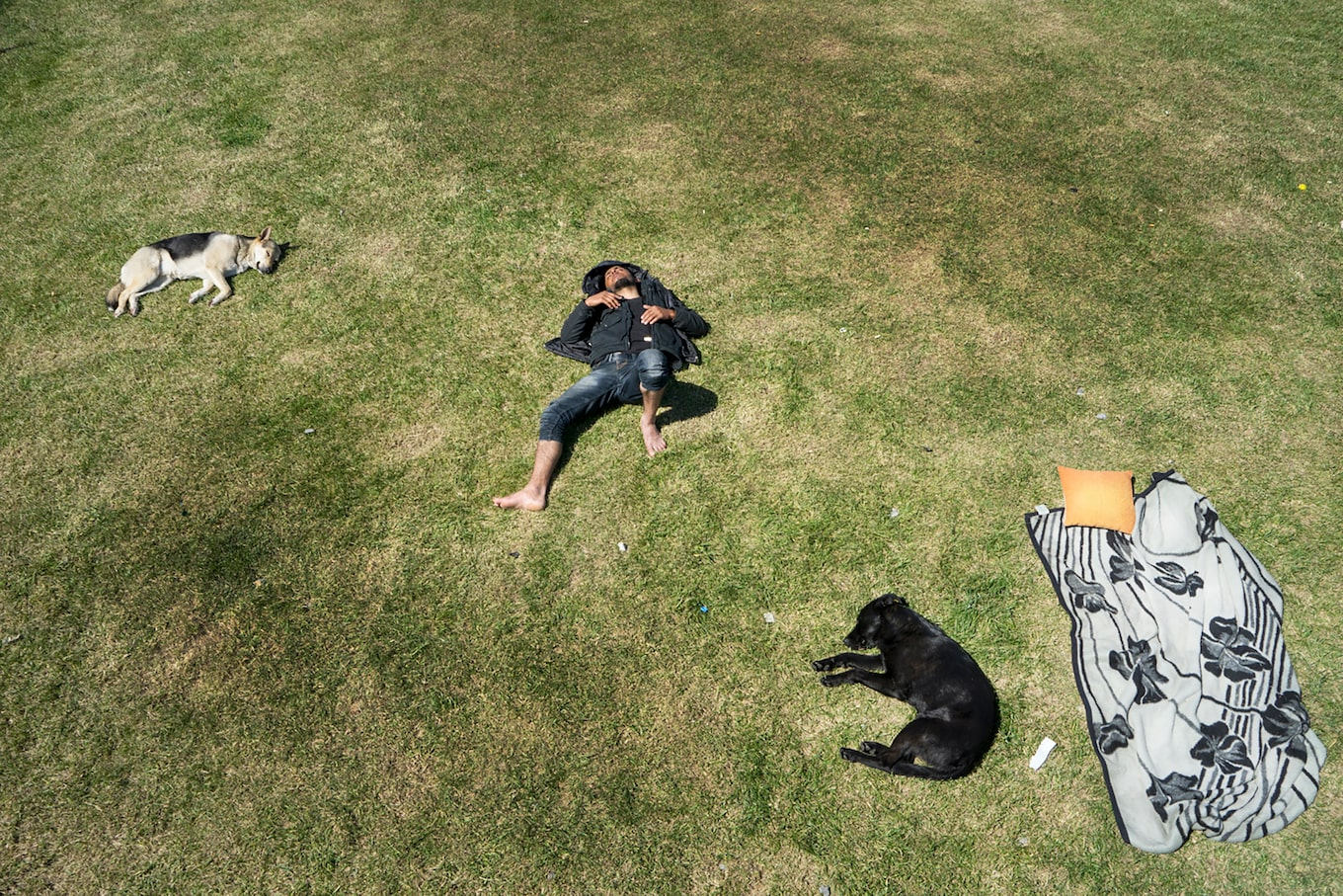 murat-pulat-sony-alpha-7II-man-asleep-in-sunny-field-with-dogs