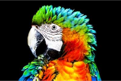 Λεπτομέρεια παπαγάλου σε OLED της Sony με Pixel Contrast Booster